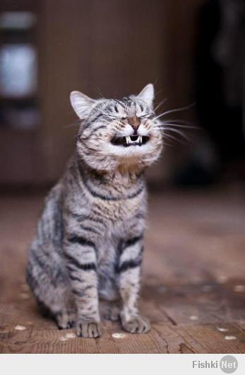Коты ржут картинки