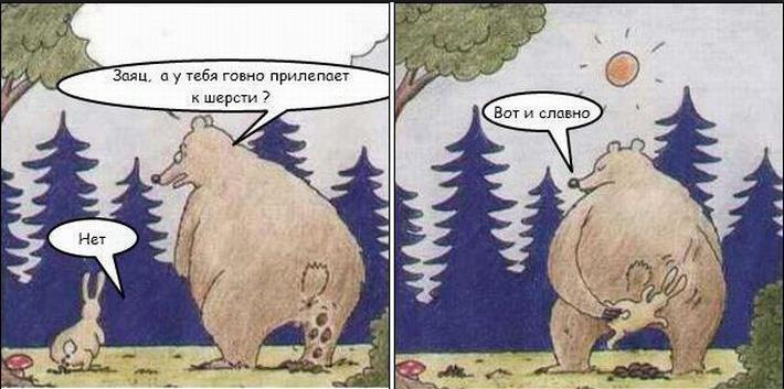 Медведь срет заяц