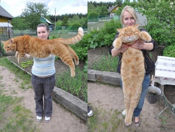 В ответ на http://pikabu.ru/story/_1997906 Вот такой котик у знакомой:)