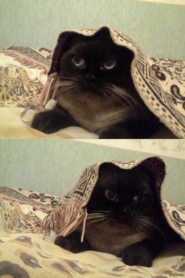 Не перестаю умиляться своему коту