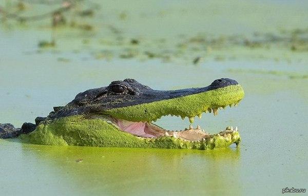 Это крокодил И у него заразительно хорошее настроение )