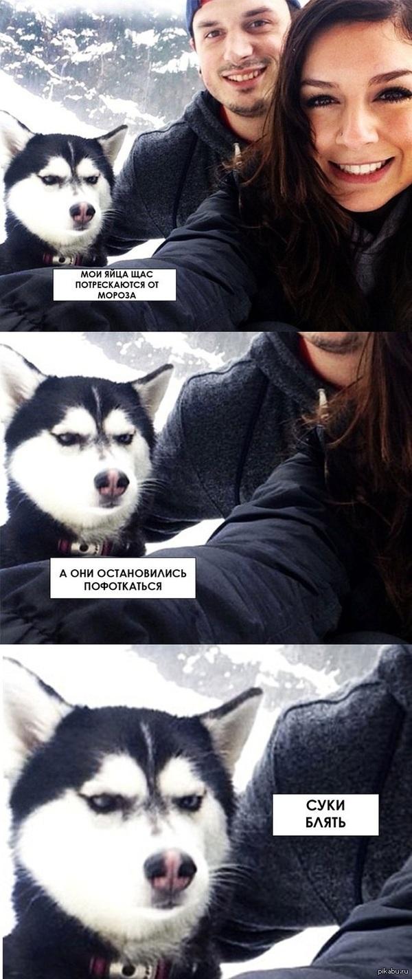 Собака и холод