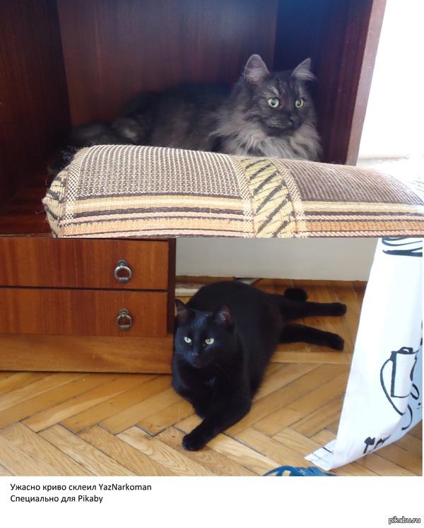 Два богатыря Коты моей сестры, я первый раз склеил две картинки вместе)))