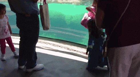 Девочка играет с тюленем