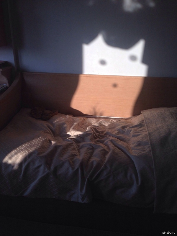 Сегодня увидела на своей кровати кота.) внезапно) А на деле я просто ищу повод не готовиться к зачету. -_-