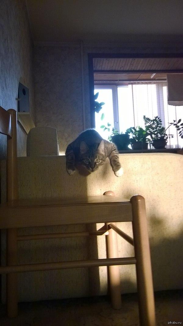 Пропал кот. Выпал из окна. Имя - Матисс. Правый верхний клык сломан. Окрас - дворовый, зеленый. Помогите, пожалуйста. Друзья, помогите. Может есть пикабушники из моего района, может случится чудо и они помогут. Выпал из окна кот, 04.06.14. Все в лс vk.com/bach-t. Вознаграждение