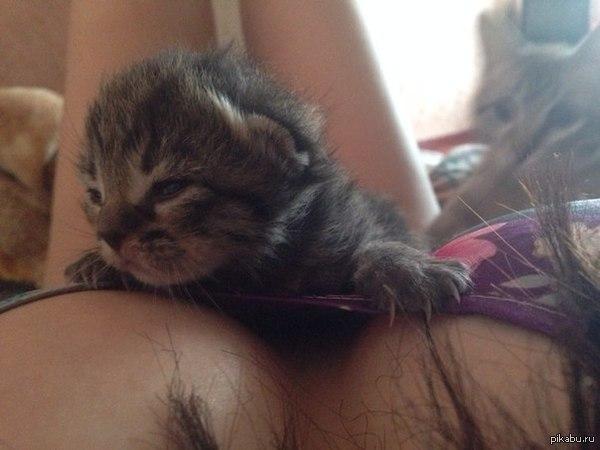 Котёнок с сиськами