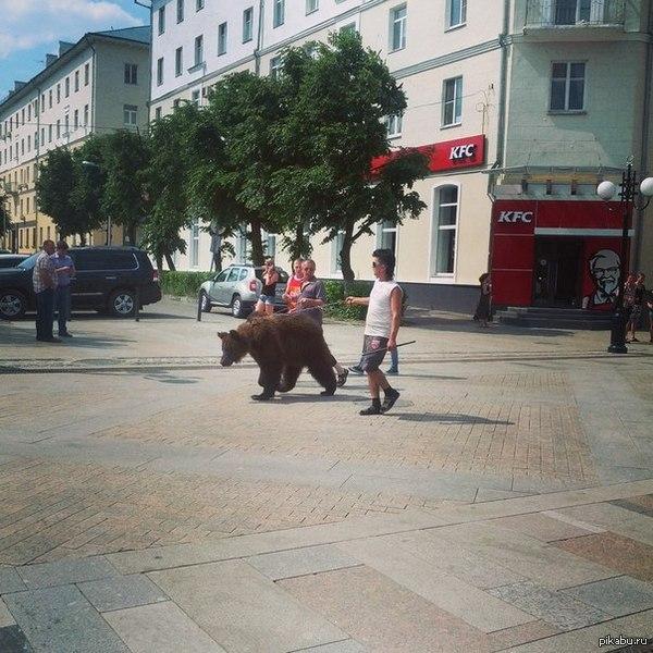 А Вы все Челябинск В Пензе особо суровые жители выгуливают медведей, а не собачек.