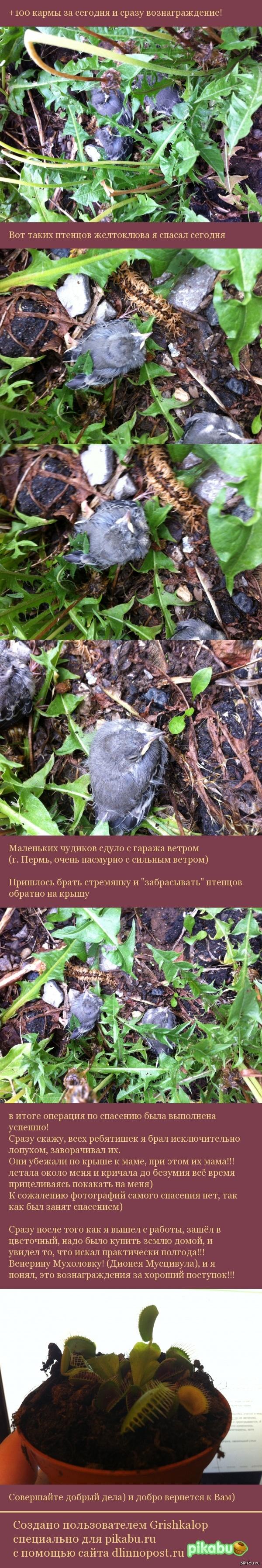 Кормите птиц - делайте добро