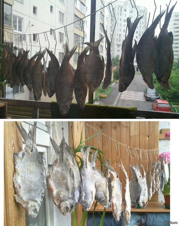 Пятничное моё. Съездил в прошлую субботу на рыбалку и подготовился к ЧМ 2014! Несмотря на пасмурную погоду рыбка уже достаочно хорошо подсохла. Думаю, что к игре сборной России уже можно будет снять пробу!