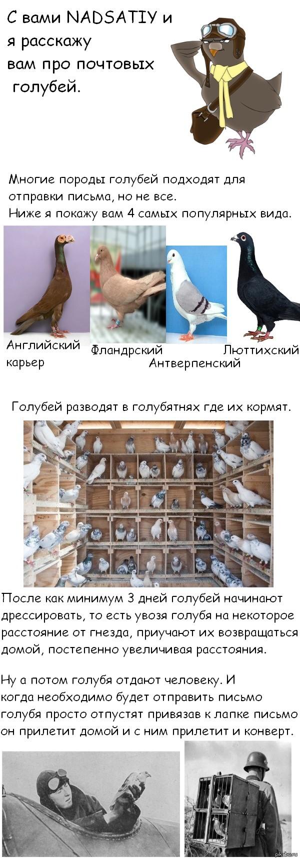 Про почтовых голубей.