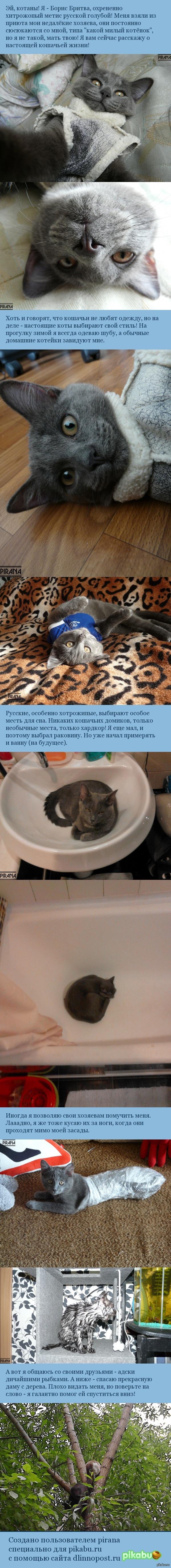 Котообзор от Бориса Наш кот Борис Бритва видел много всяких постов про котов и обижался, что про него никто не пишет. И вот настал его час.