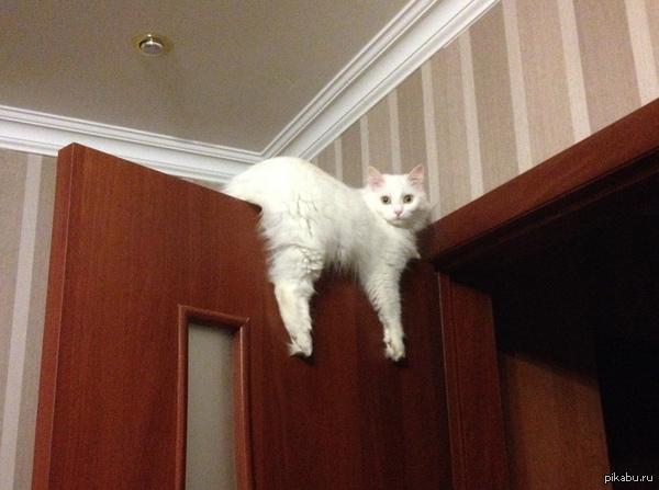 Мой кот - монорельс На самом деле это - кошка, и вот так она любит сидеть верхом на дверях :3