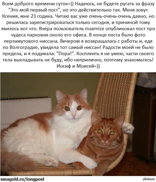Братаны-котаны