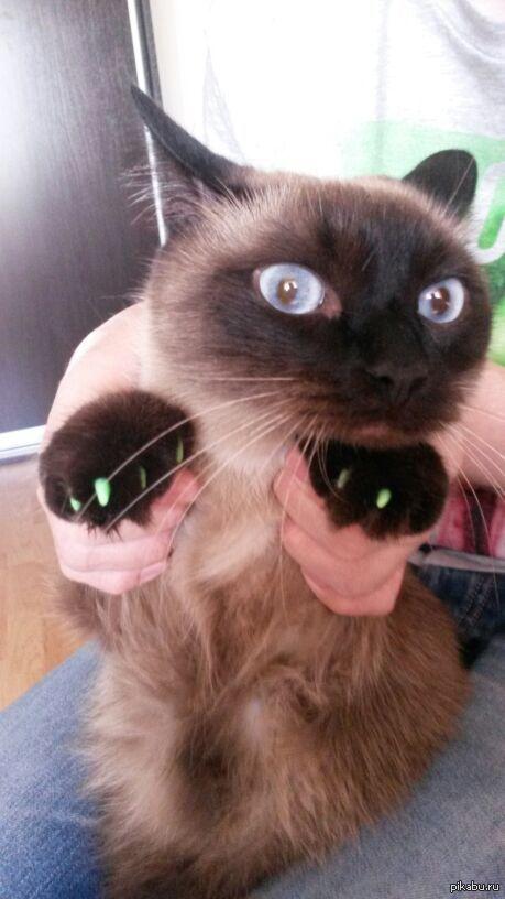 Кот и новый ремонт