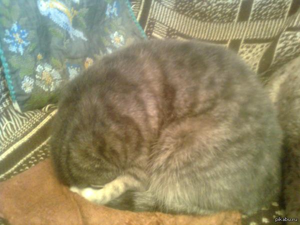 Так странно заснула моя кошка. Дамы и господа, кто-нибудь знает, с чем это может быть связано?