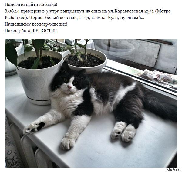 Пропал кот. Санкт-Петербург