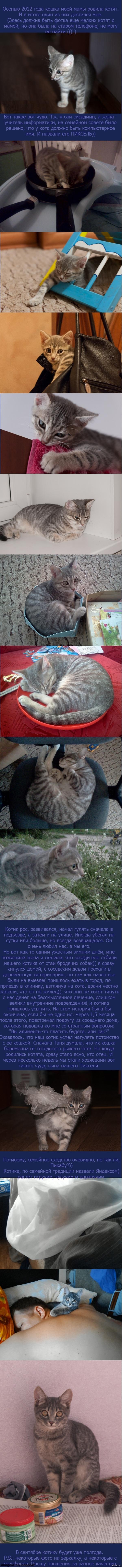 Пикабу любит котиков? Вот вам мои котики! Очень длиннопост о котиках, радостный и печальный одновременно.