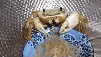 Крабик ест лапшичку
