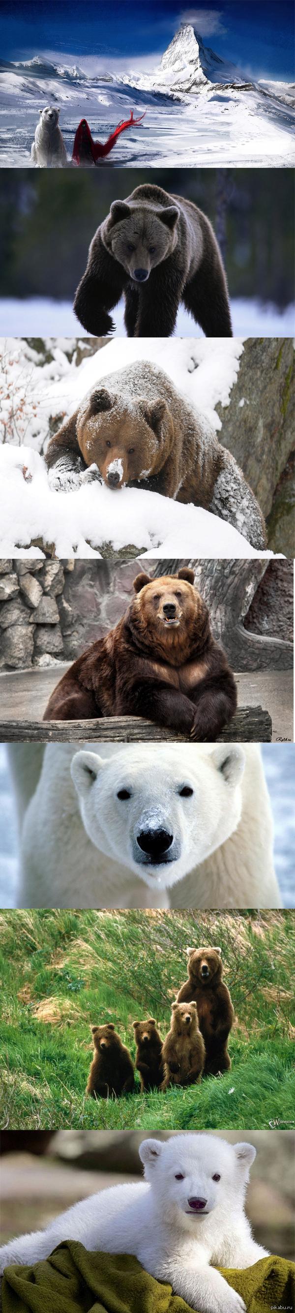 Медведи)