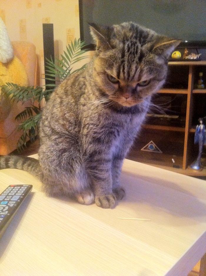 По-моему, мой кот недоволен что я пришел домой