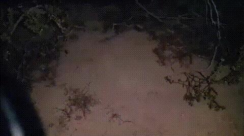 Как заметить скорпиона ночью