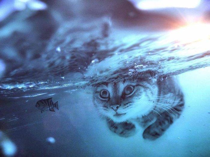 Потрясающие кадры о том, как выглядел бы мир, если бы животные были гигантскими Животные, Дикая природа, Красивое, Длиннопост