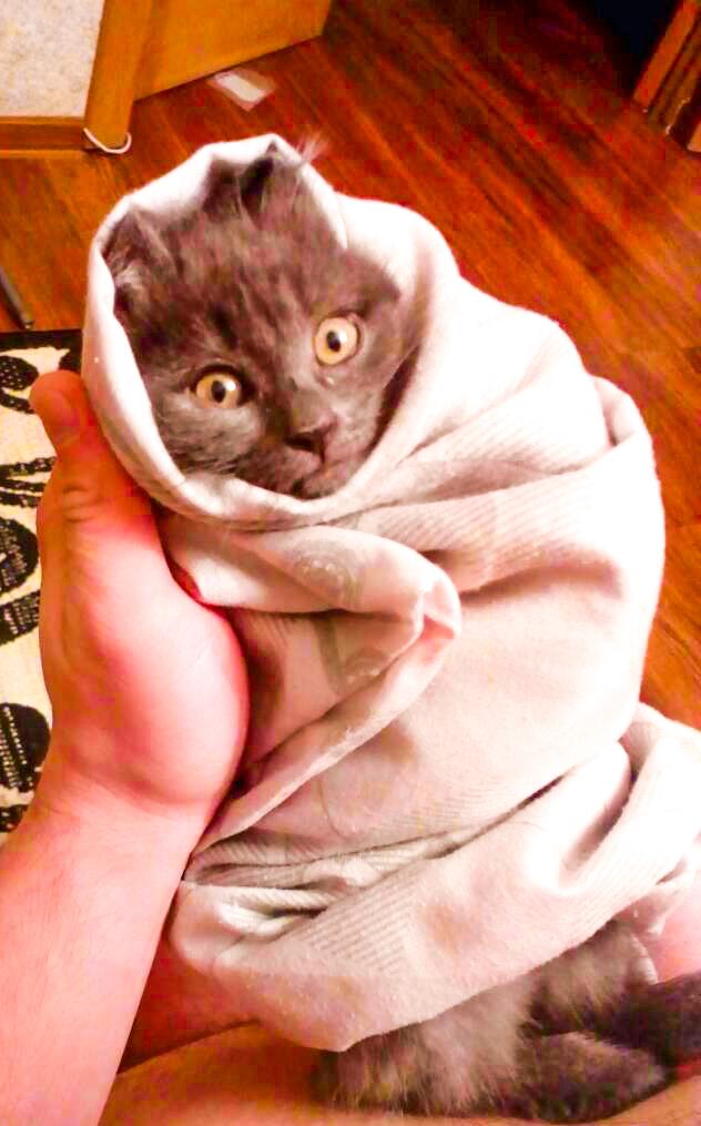 Шаурмяу Кот, Милая киса, Крошечный котенок, Шаурма, Привет читающим тэги, Тюмень, Продам гараж