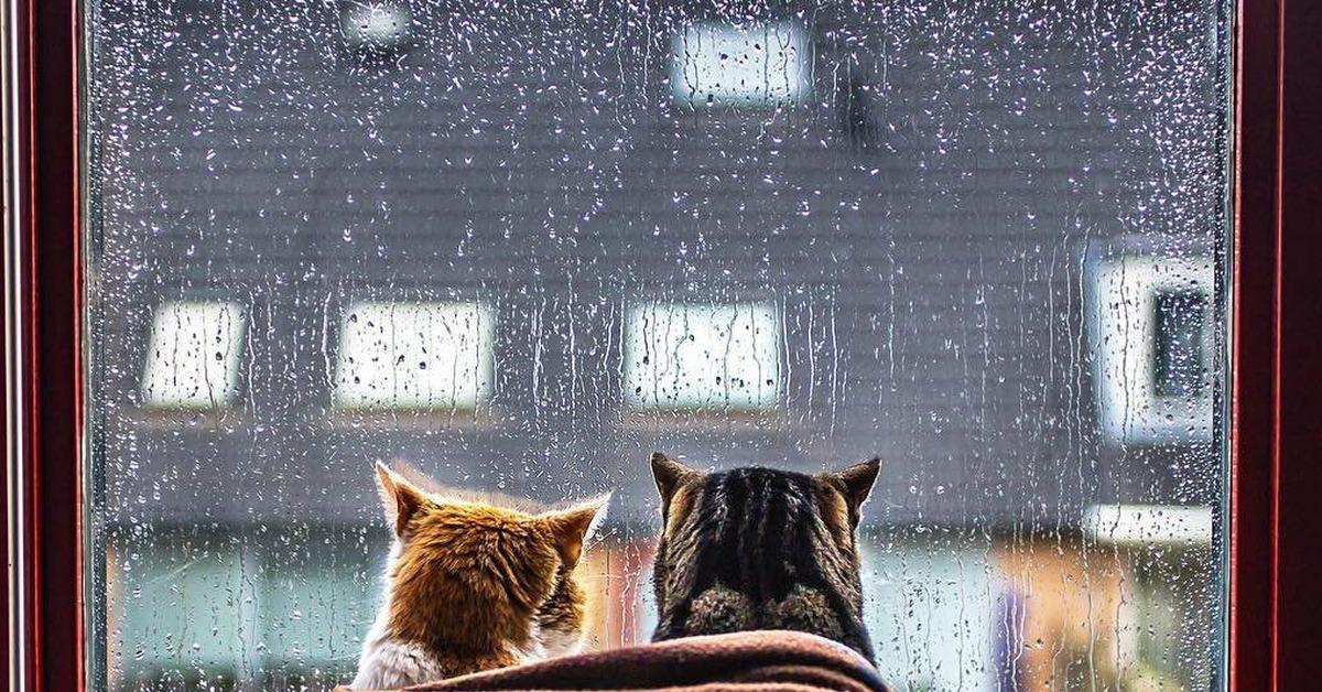 Смешные андрей, картинки доброе дождливое утро вторника