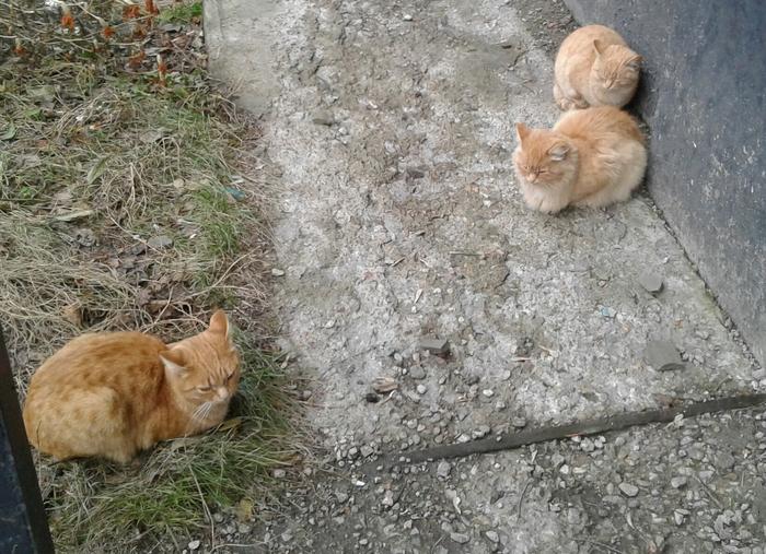 Три кота - три хвоста