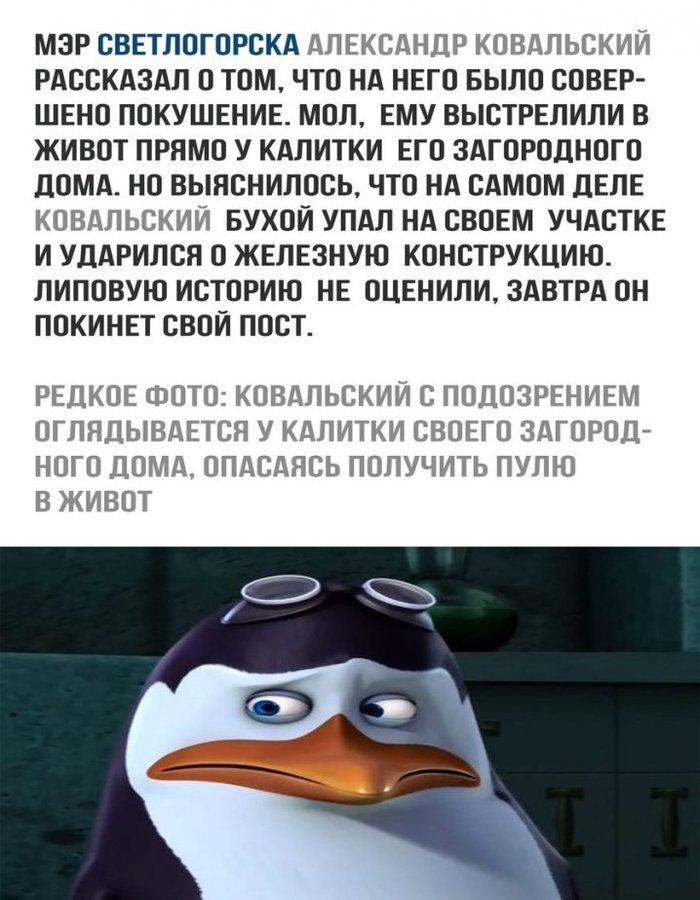 Ковальский Политика, Мэр, Светлогорск, Отставка