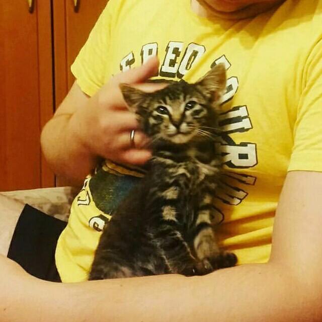 Лесной кот Кот, Домашний любимец, Дворняга, Английский бульдог, Длиннопост