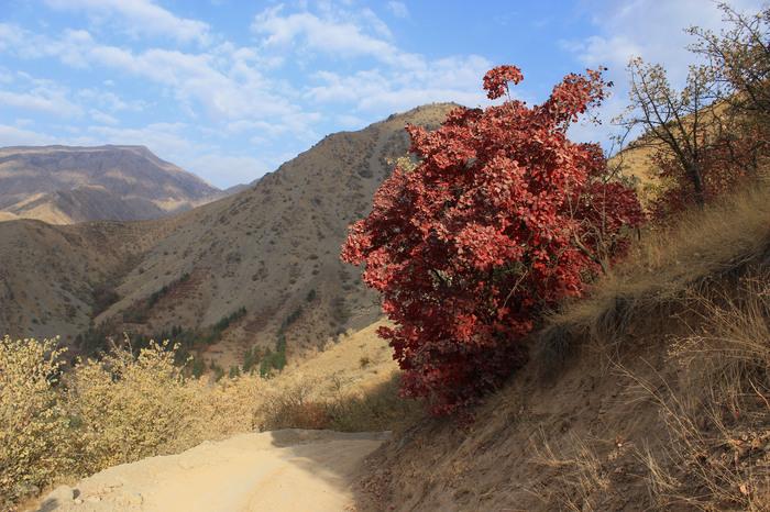 Осень в горах Горы, Кустарник, Боярка