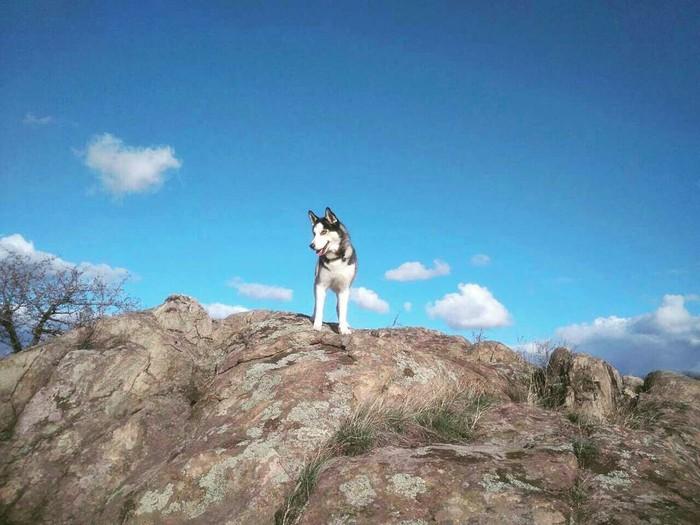 Раздолье! Остров Хортица Хортица, Собака, Сибирский хаски, Природа, Хаски, Прогулка