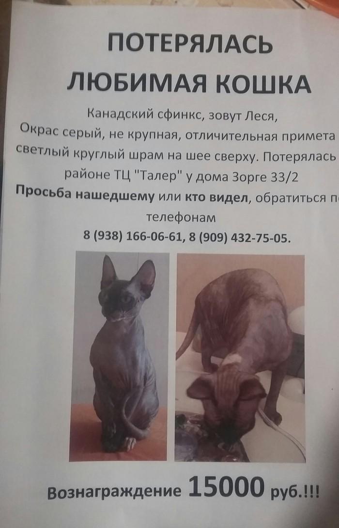 Потерялась кошка. Помогите найти. Потеряшка, Ростов-На-Дону, Длиннопост, Кот, Помощь