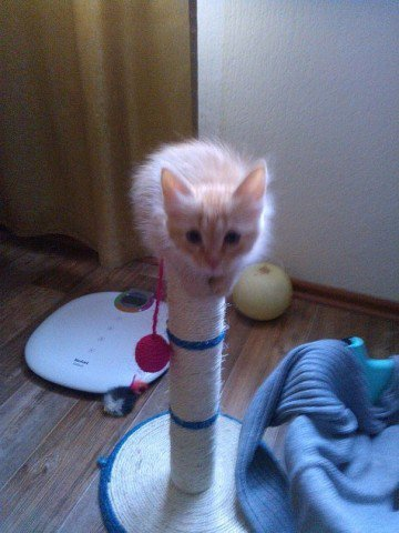 И теперь в моем доме даже в самую ненастную и хмурую погоду живет кусочек солнышка Кот, Кошка Масяня, Породы кошек