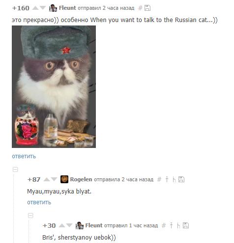Cat Boris Hren Popadesh Комментарии, Кот, Мяу, Транслит