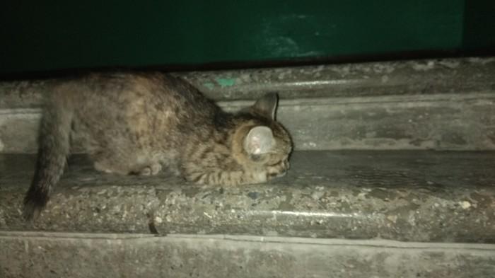 Новосибирск, подбросили котёнка в подъезд, вроде бы мальчик. Нужен кому? [забрали]] Новосибирск, Кот, Подбросили, В добрые руки, Помощь, Видео