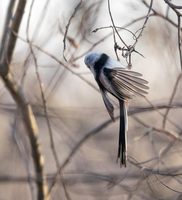 Фотоохота 3 Фотоохота, Прогулка, Птицы, Длиннопост