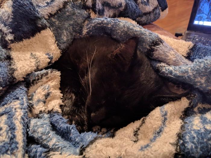 Плохой день Отравление, Домашние животные, Кот