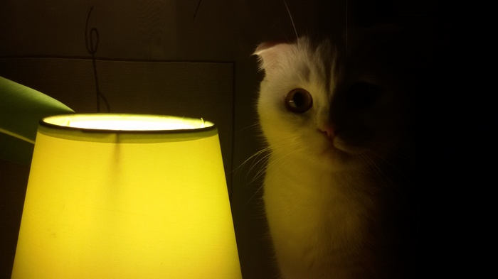 Моя котолампа Кот, Лампа