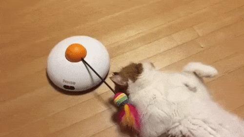 Играть! Играть! Давай!