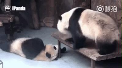 Панды милые создания...