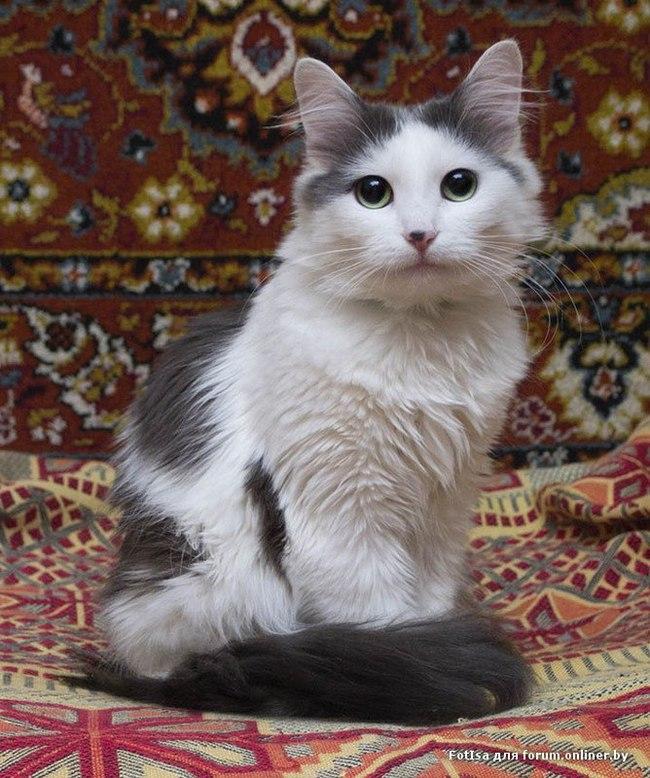 Кошка в добрые руки. Нижний Новгород Кот, В добрые руки, Нижний Новгород, Котомафия