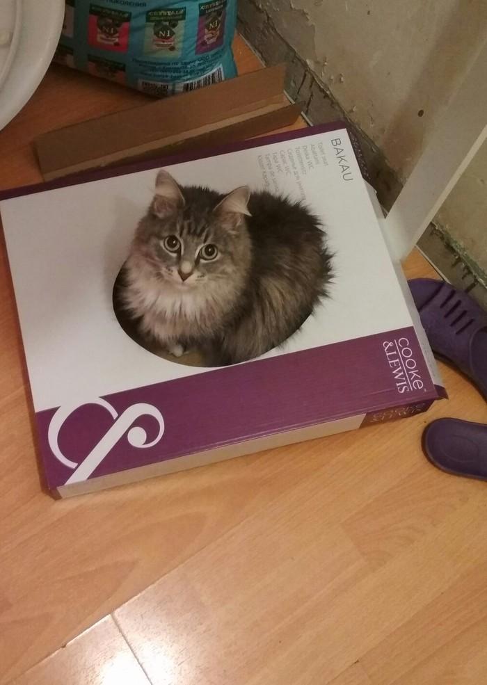 Коробка для Котострофы
