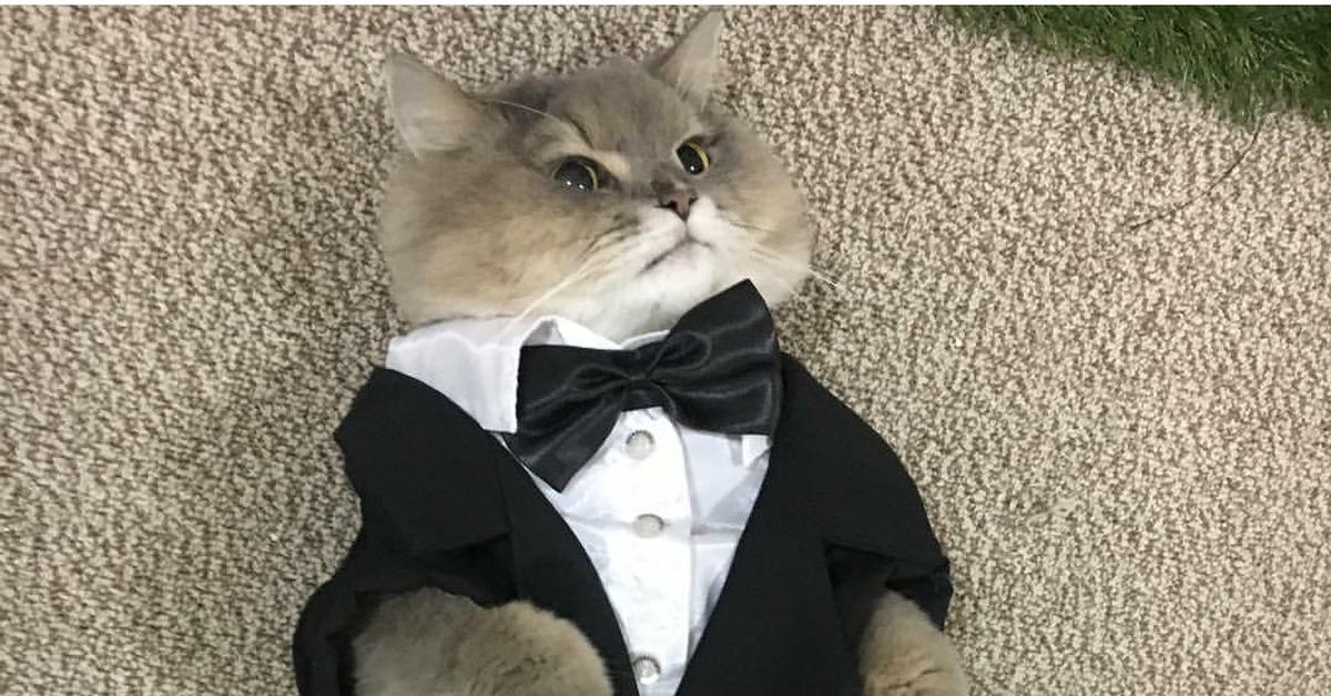 кот спецагент картинки стильные качественные