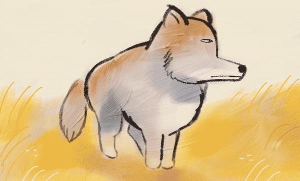 Тибетская песчаная лиса