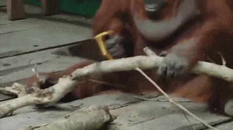 Навык плотника повышен.