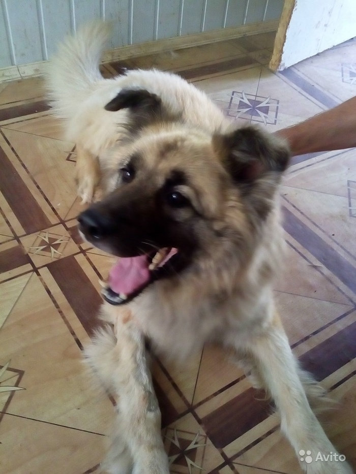 Собачку в добрые руки Собака, В дар, Одинцово, Самый верный друг, В добрые руки, Помощь