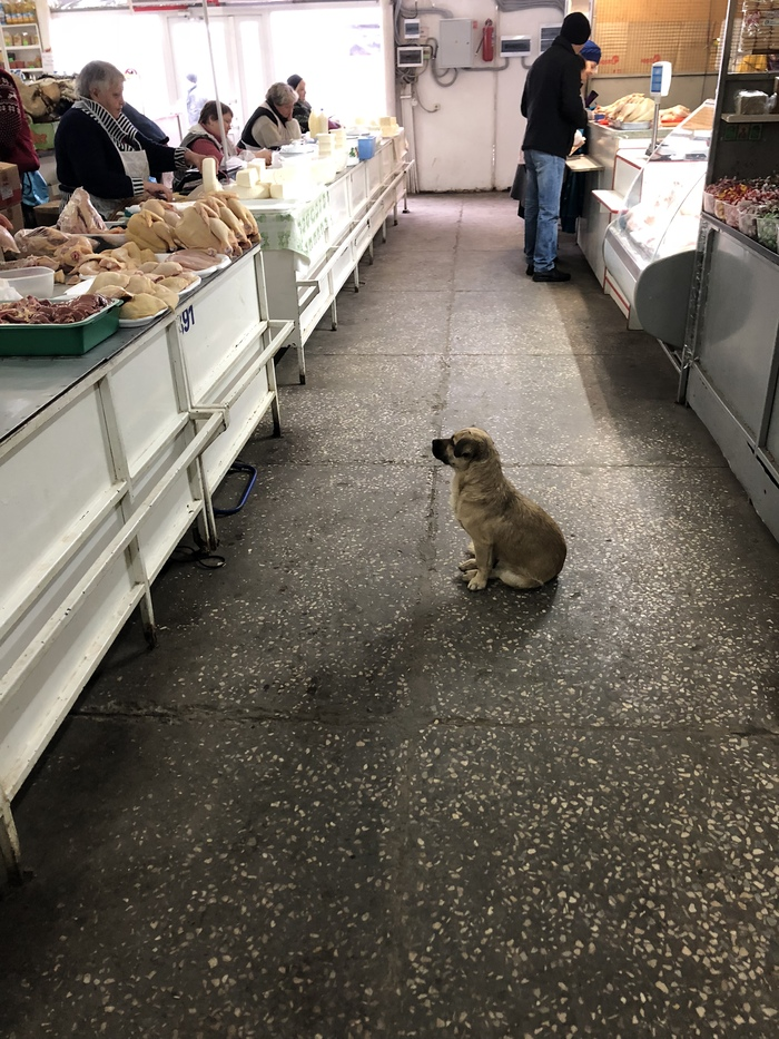Ты отдашь мне эту куриную ножку рано или поздно... Собака, Милота, Курица